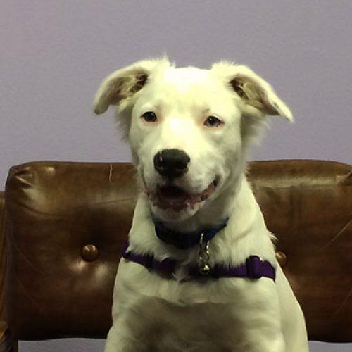Fiona, Shop Pup